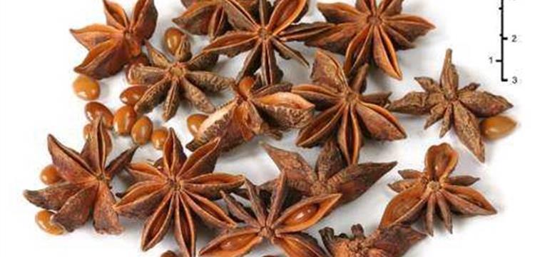 Dibeli Bunga Pekak Lawang (Illicium Verum)
