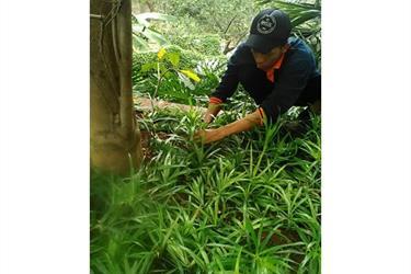 Jasa Perawatan Taman Di Universitas