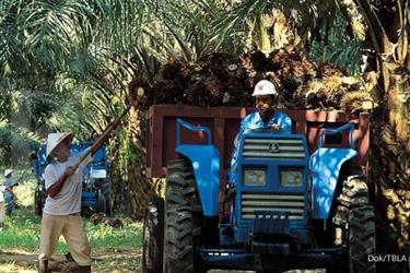 Tunas Baru Lampung (TBLA) memburu pendapatan Rp 9 triliun tahun ini